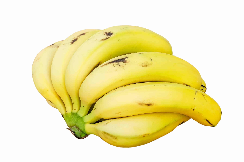 A Bounty of Bananas | Bee Heaven Farms Blog